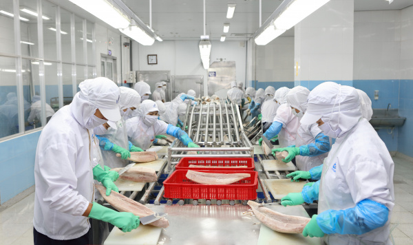 Anova scales up production of MSC cod and MSC tuna